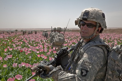 Afghan Poppy Field